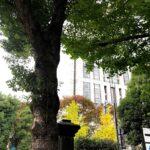 東京地方裁判所の入り口