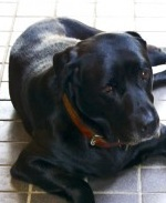 厚木の弁護士事務所-black dog