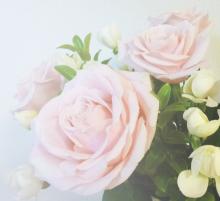 厚木の弁護士事務所-薔薇