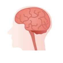 厚木の弁護士事務所-脳