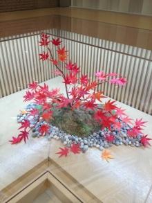 厚木の弁護士事務所-紅葉の木